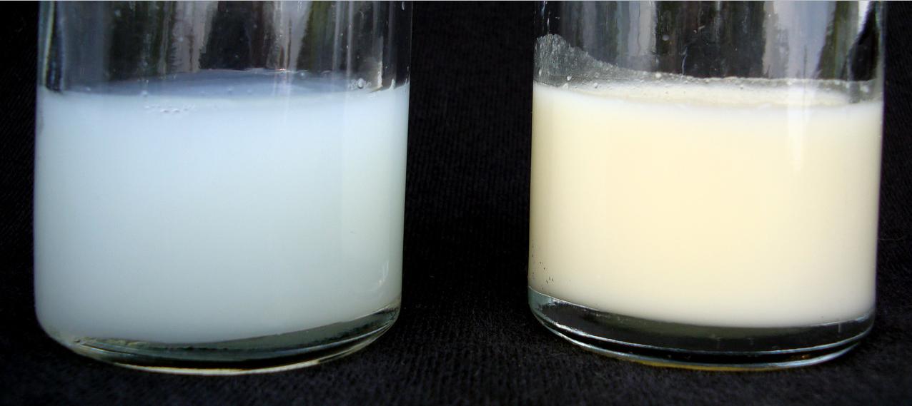 Как и чем повысить жирность молока в домашних условиях